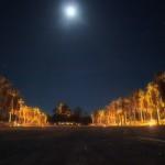 Palmenallee im Mondschein